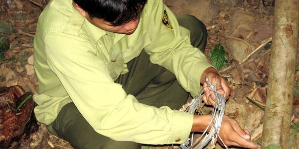 Removing snares in Vietnam. Photo: Andrew Tilker